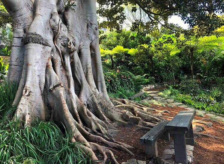 Bench and old tree in Wendy's Secret Garden