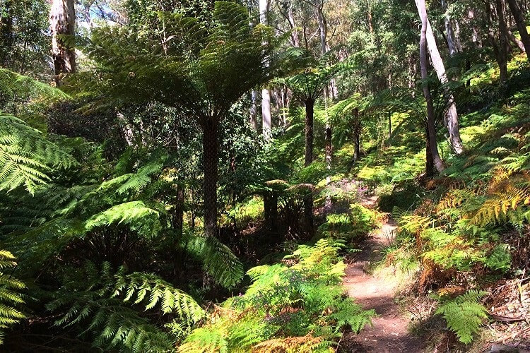 Federal Pass walking track