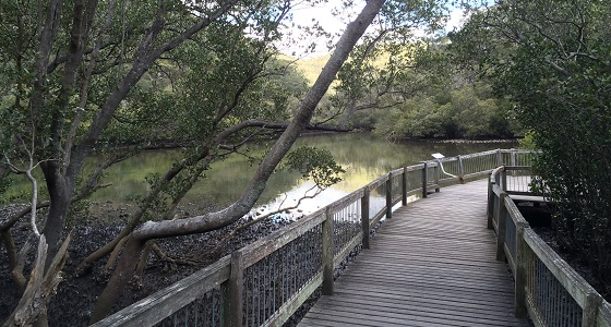 Mangrove boardwalk in Bobbin Head