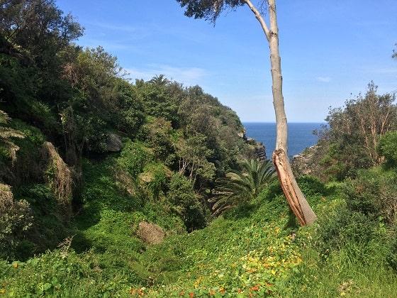 Swamp area at Diamond Bay leading into Rosa Gully