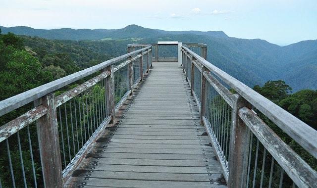 Skywalk Lookout at the Dorrigo Rainforest Centre