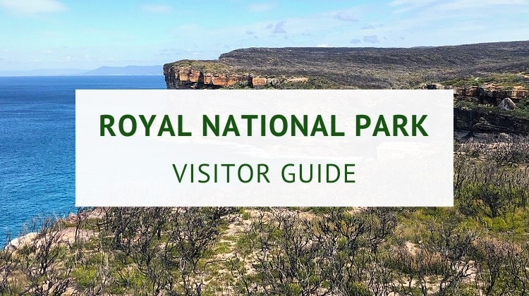 Royal National Park in Sydney (visitor guide)