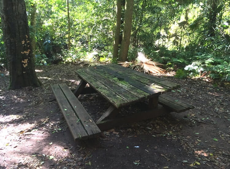 Neglected picnic table along the Forest Path