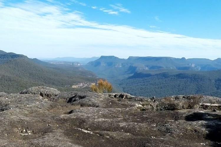 Mount Bushwalker walking track