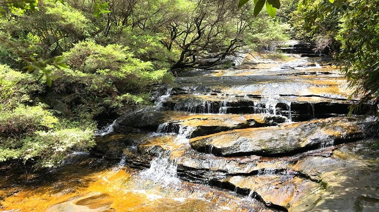 Leura Cascades Walk and Picnic Area