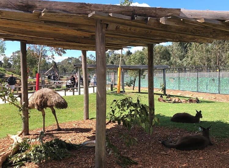 Australian native animals in Sydney Zoo