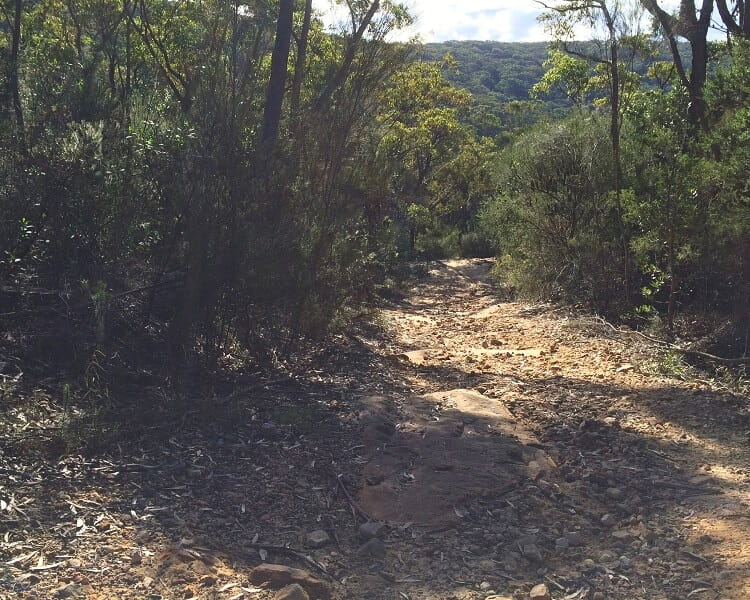 The track to Winifred Falls