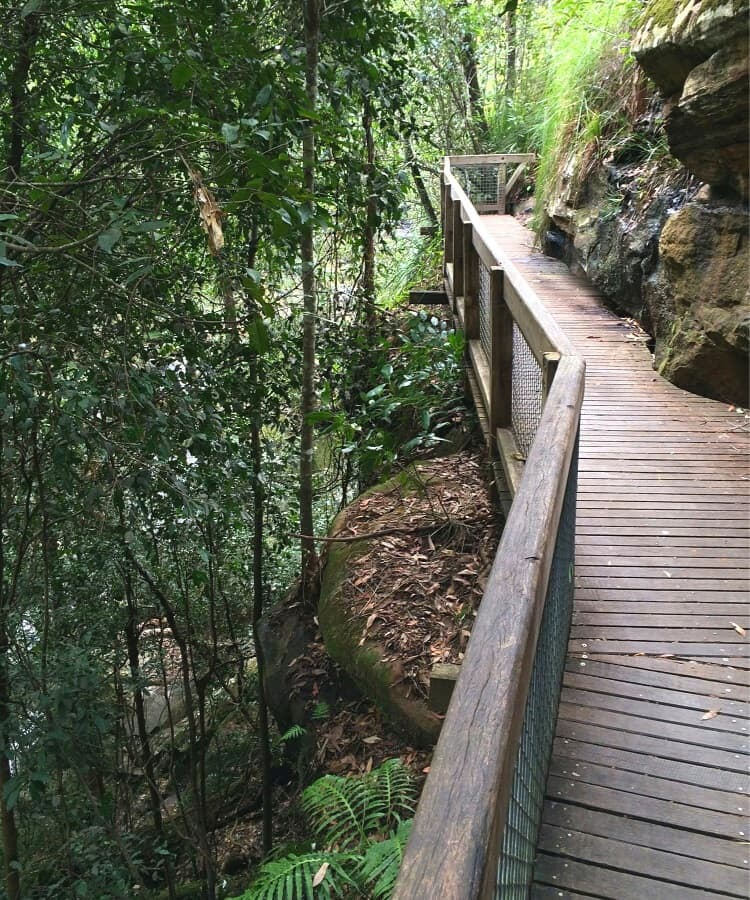 Walking track to Somersby Falls