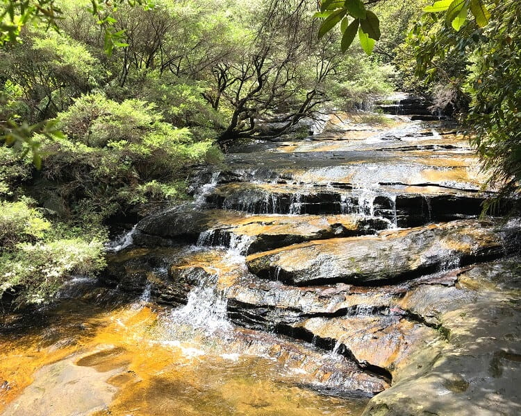 Ultimate Blue Mountains Private Tour