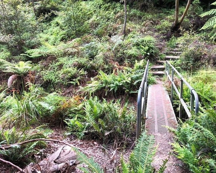 Lyrebird Dell walking track