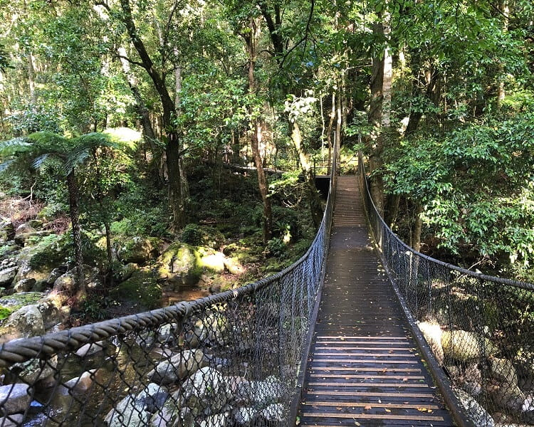 Loop Walk in the Minnamurra Rainforest