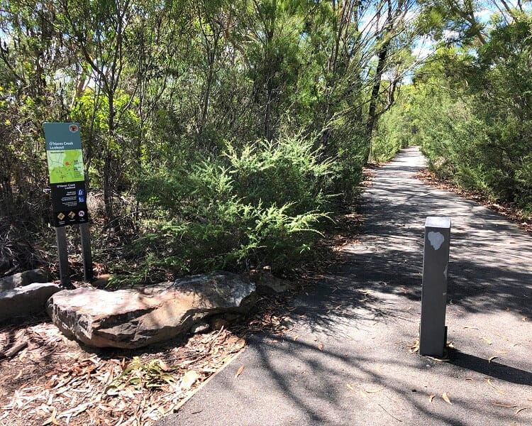 Walking path to the O'Hares Creek Lookout