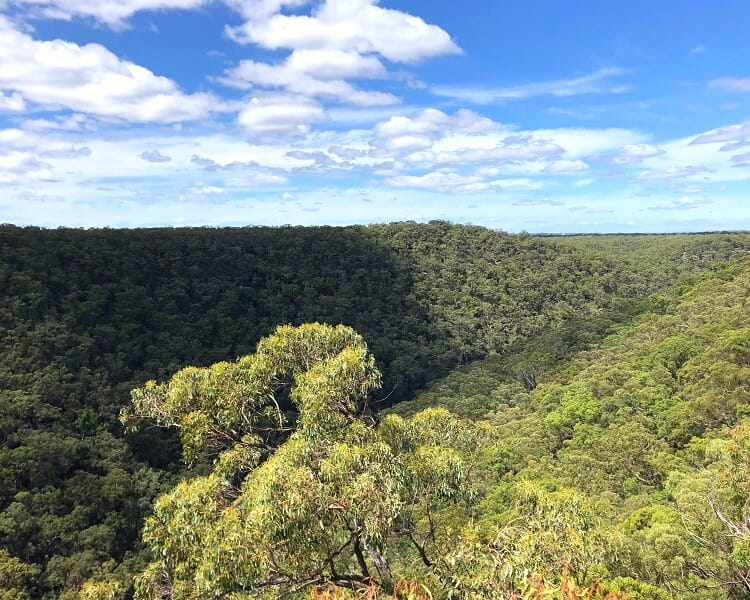 Scenic views from the O'Hares Creek Lookout