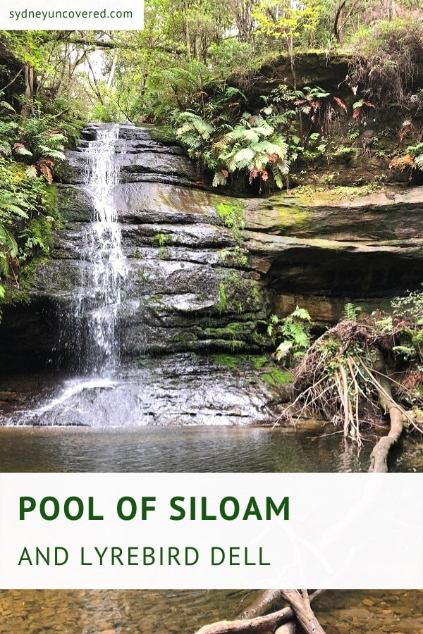 Pool of Siloam and Lyrebird Dell circuit walk