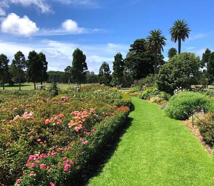 Rose Garden in Centennial Park