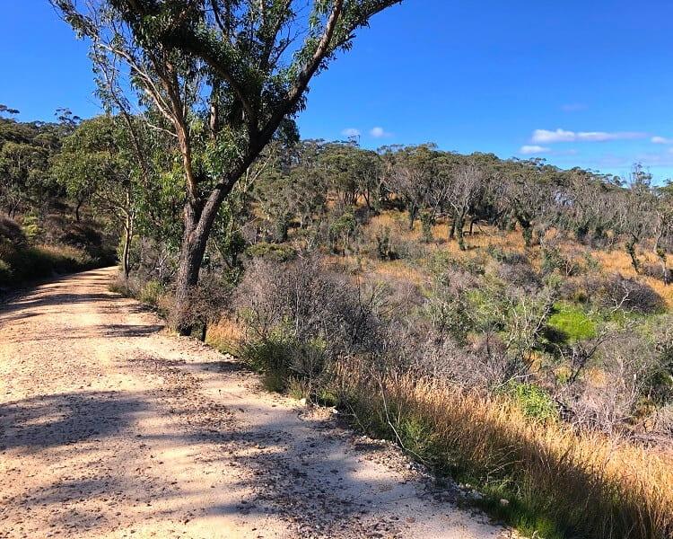 Glenraphael Drive on the Narrow Neck Plateau