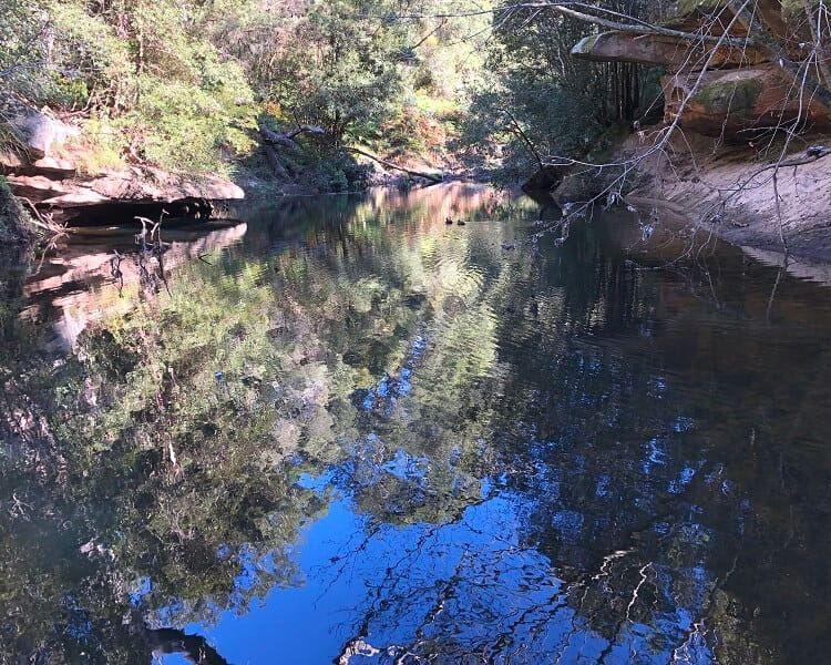 The Fishponds on the Blue Gum Walk