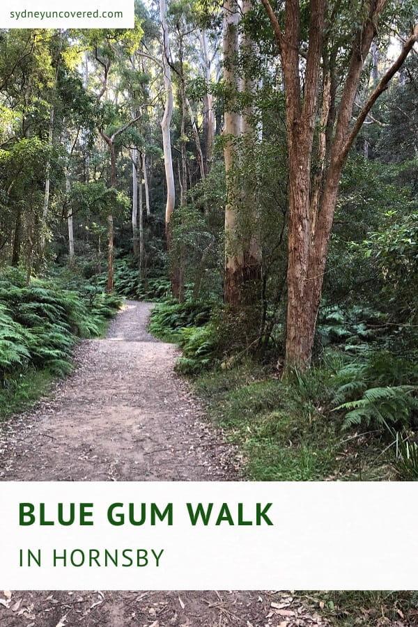 Blue Gum Walk in Hornsby