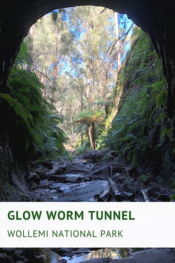 Glow Worm Tunnel walking track in Wollemi National Park