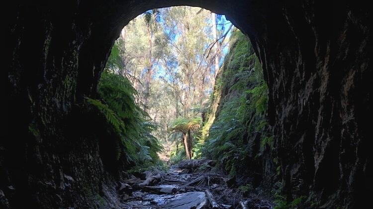 Glow Worm Tunnel walking track