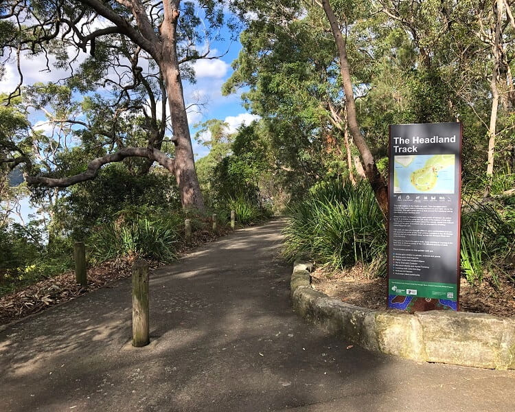 The Headland Track in Oatley