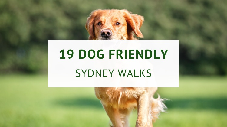 Sydney dog friendly walks
