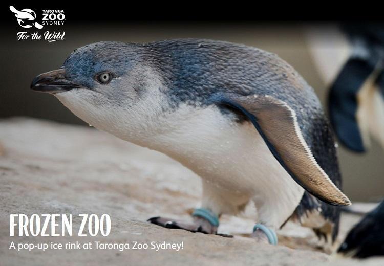 Frozen Zoo at Taronga Zoo