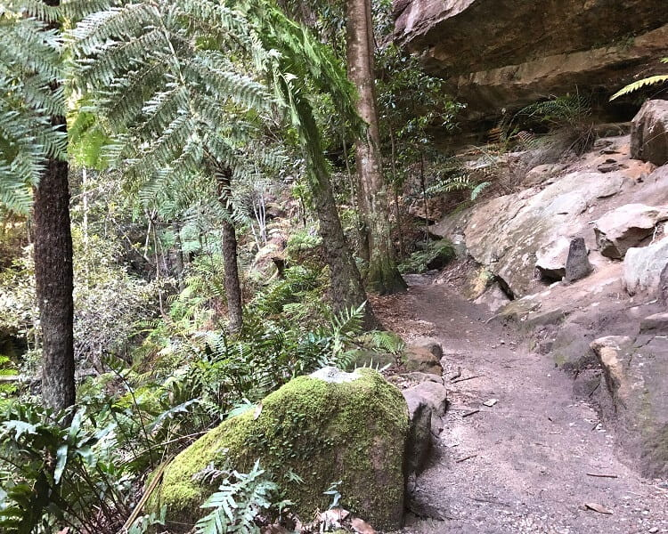 Rainforest in the Grand Canyon