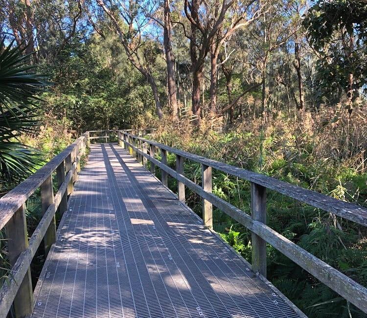 Bushwalking in Narrabeen