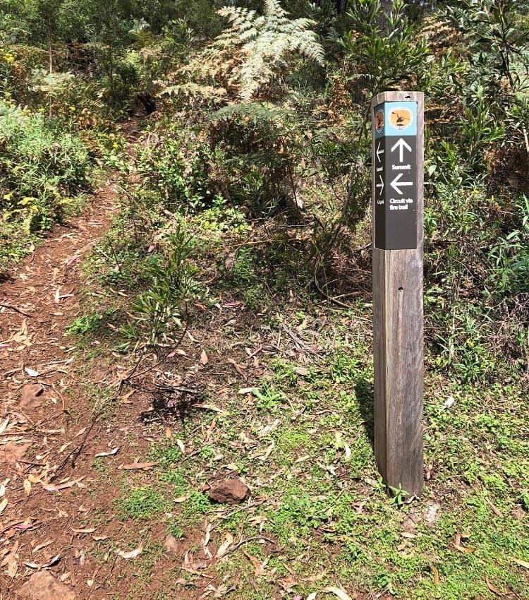 Mount Banks summit walk intersection