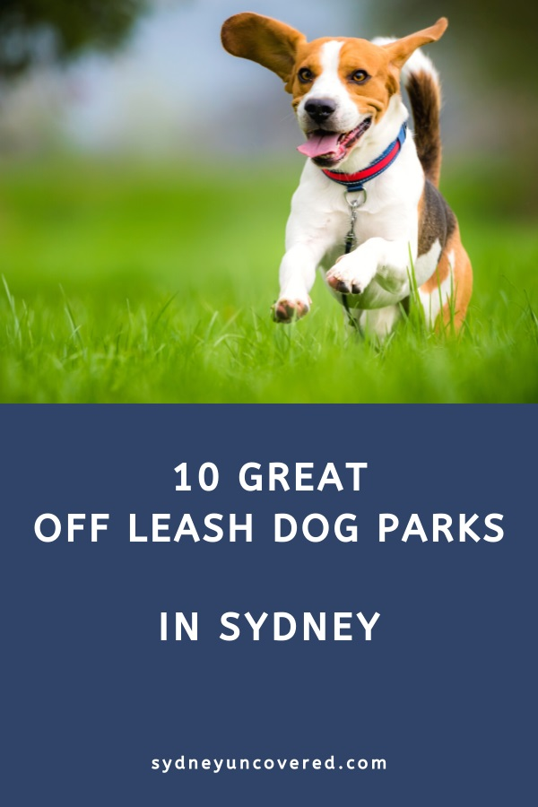 Best dog friendly parks in Sydney