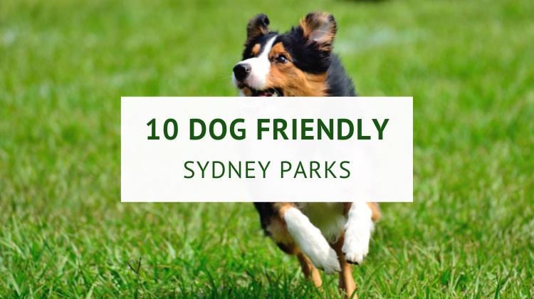 Off leash dog parks in Sydney