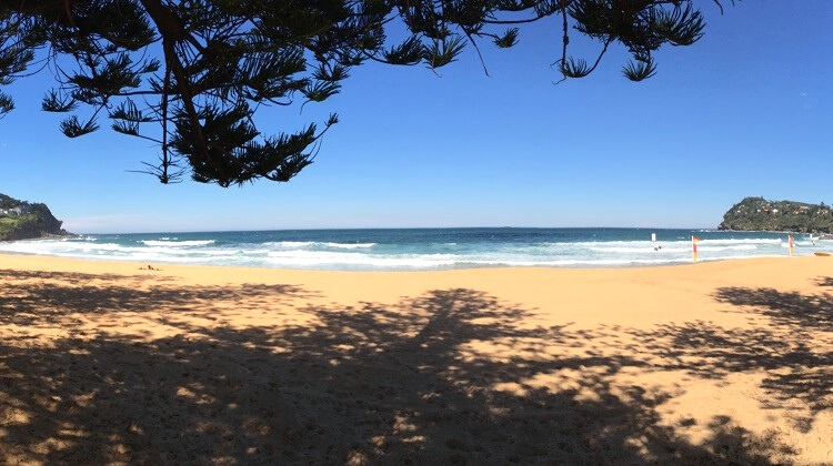 Whale Beach in Sydney's northern beaches